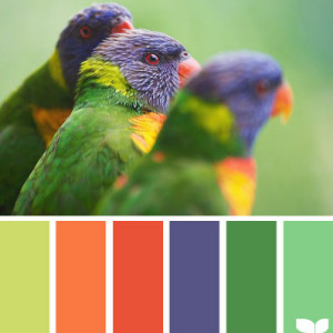 Orange-Kitchen-Colour-Scheme-1