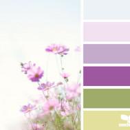 White Kitchen Colour Scheme